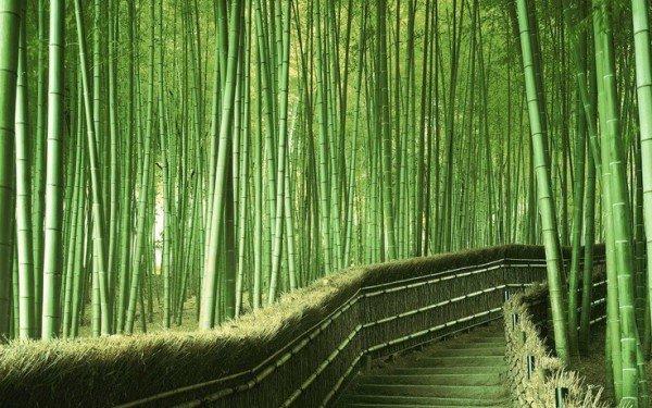 Арасияма бамбуковый лес