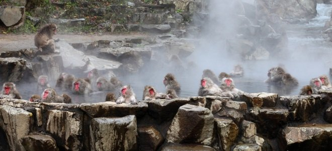 Джигокудани парк зимних обезьян