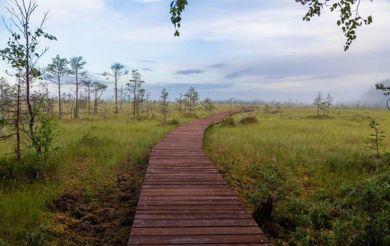 Эко-тропа в Сестрорецке как добраться, Сестрорецкое болото