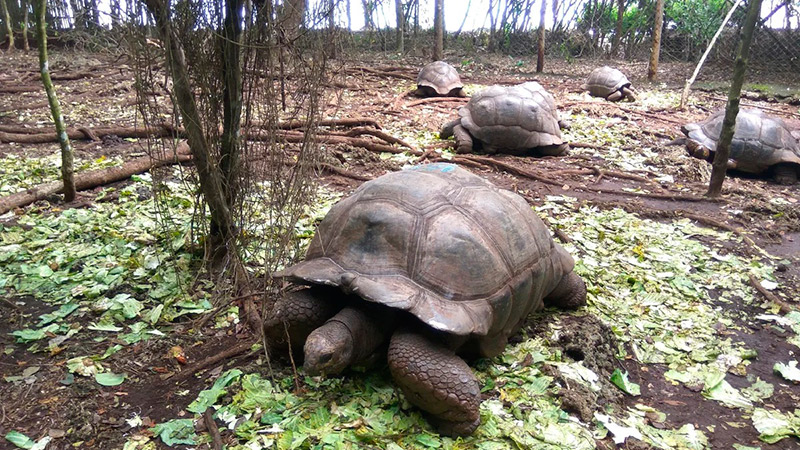 Тюремный остров, черепахи на Занзибаре