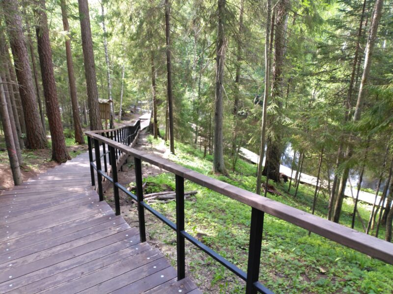 Из каких растений выращена Линдуловская лиственничная роща