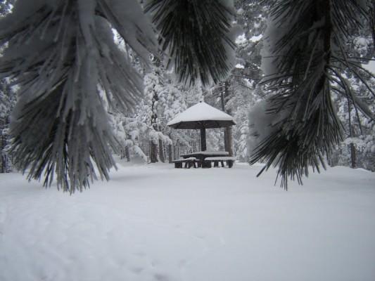 Гора Тара Сербия